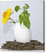 Flower And Egg Canvas Print