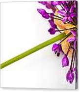 Flower At Rest Canvas Print