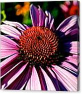 Flower Bed Close Up Canvas Print