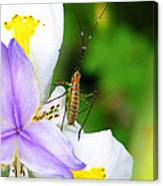 Flower Bug - I Canvas Print