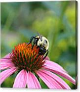 Flower Bumble Bee Canvas Print