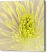 Flower Centre Canvas Print