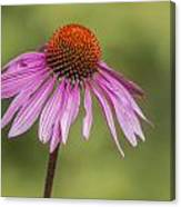 Flower Close Up At Michigan State University Canvas Print