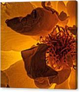 Flower Close Up IIi Canvas Print
