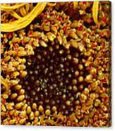 Flower - Daisy - In Other Worlds Canvas Print