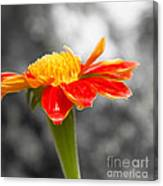 Flower Drops Canvas Print