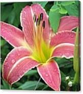 Flower Garden 01 Canvas Print