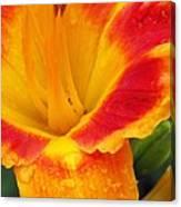 Flower Garden 06 Canvas Print