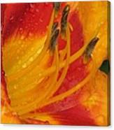 Flower Garden 10 Canvas Print