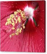 Flower Garden 17 Canvas Print