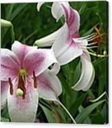 Flower Garden 20 Canvas Print