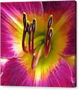 Flower Garden 30 Canvas Print