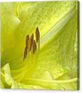 Flower Garden 33 Canvas Print