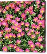Flower Garden 36 Canvas Print