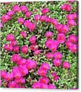 Flower Garden 38 Canvas Print