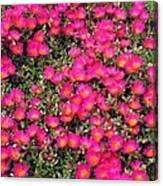 Flower Garden 39 Canvas Print