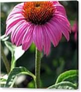 Flower Garden 48 Canvas Print