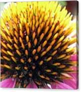 Flower Garden 49 Canvas Print