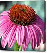 Flower Garden 50 Canvas Print