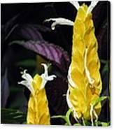 Flower Garden 51 Canvas Print