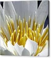 Flower Garden 55 Canvas Print