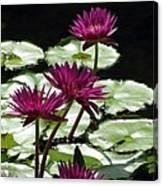 Flower Garden 59 Canvas Print
