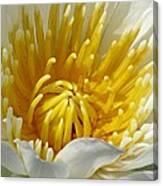 Flower Garden 68 Canvas Print