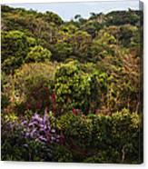 Flower Garden On A Hill Canvas Print
