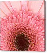 Flower - I Love Pink Canvas Print