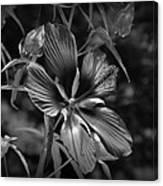 Flower In B-w Canvas Print