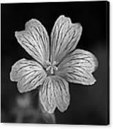 Flower In Black And White Canvas Print