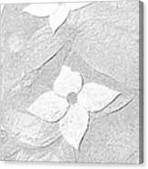 Flower In Pencil Canvas Print