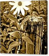 Flower In Sepia Canvas Print