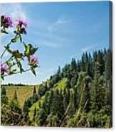 Flower In The Carpathians Canvas Print