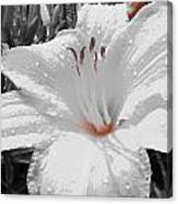 Flower Isolate Canvas Print
