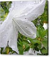 Flower Laced With Rain Drops Canvas Print