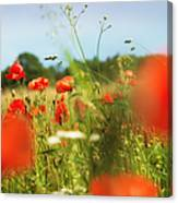 Flower Meadow In Summer With Red Poppy Canvas Print