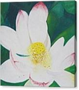 Flower Nectar Canvas Print