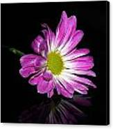 Flower On Glass Canvas Print