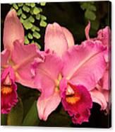 Flower - Orchid -  Cattleya - Magenta Splendor Canvas Print