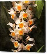 Flower - Orchid - Dendrobium Orchid Canvas Print