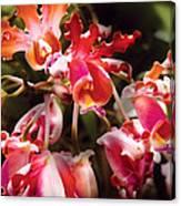 Flower - Orchid - Oncidium Orchid - Eye Candy Canvas Print