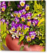 Flower - Pansy - Purple Posies  Canvas Print