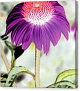 Flower Power 1357 Canvas Print