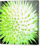 Flower Power 1361 Canvas Print