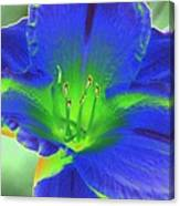 Flower Power 1443 Canvas Print