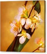 Flower - Sakura - A Touch Of Spring Canvas Print