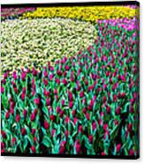 Flower Sea Canvas Print