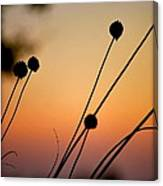 Flower Silhouettes I Canvas Print