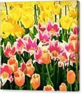 Flower Splash Ix Canvas Print